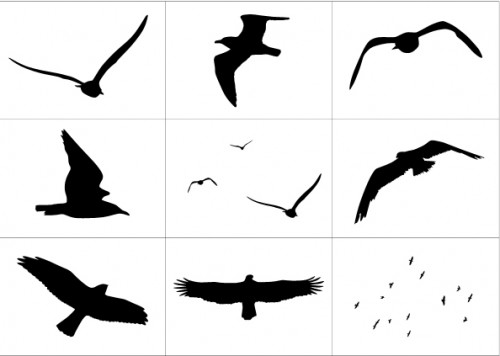 Custom Shapes: Birds