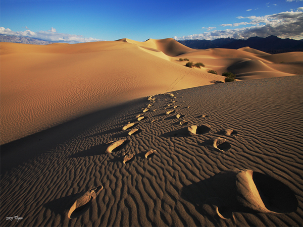 Traces of Life in Death Valley